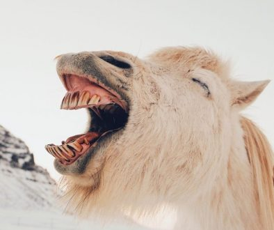 horse laughing humor self-care activity